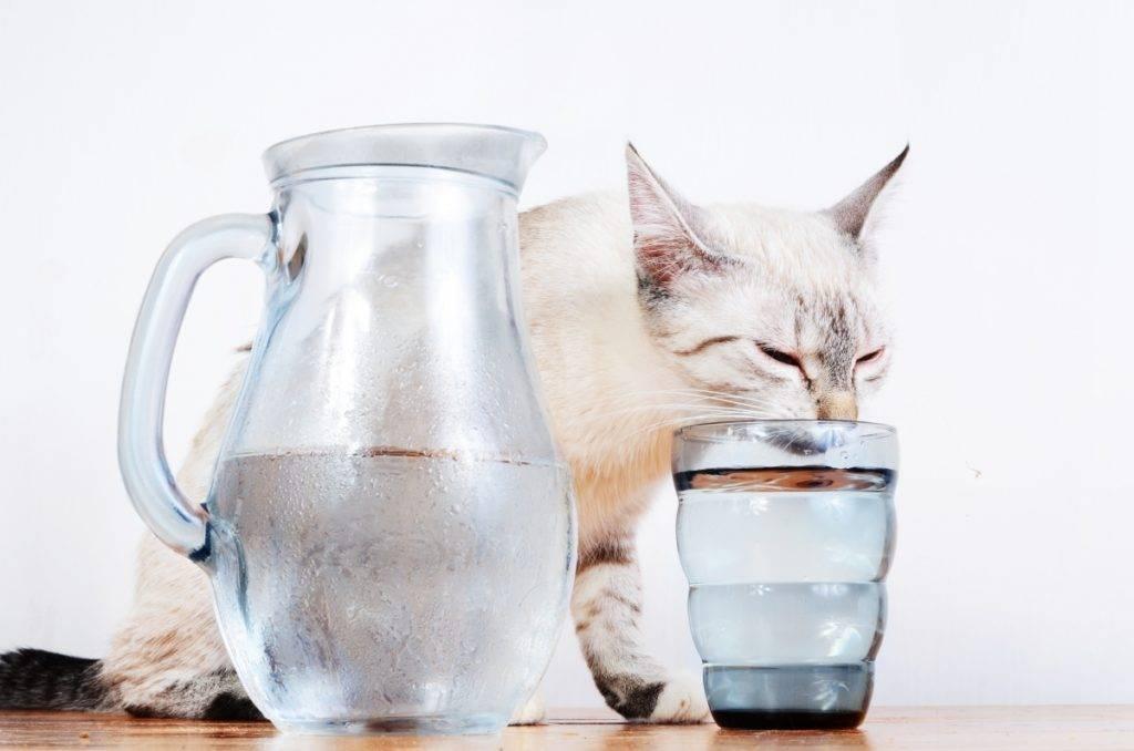 Что делать, чтобы кошка пила больше воды