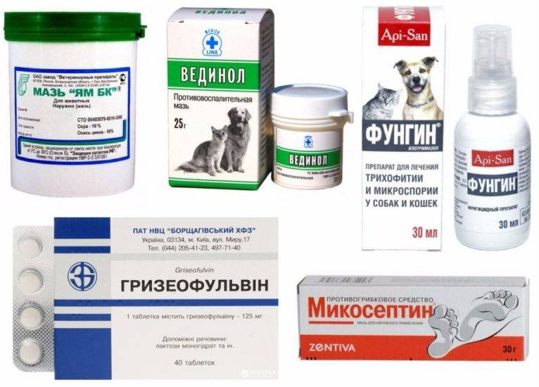 Стригущий лишай у кошек - симптомы, лечение, профилактика