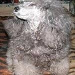 Перевод щенка с сухого корма на натуральный