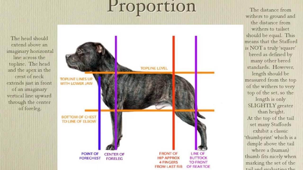 Ротвейлер собака. описание, особенности, уход и цена ротвейлера
