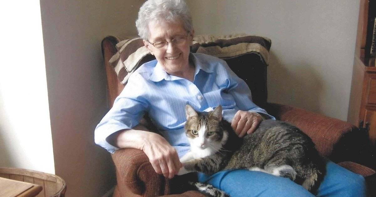 Как ухаживать за пожилой или старой кошкой?