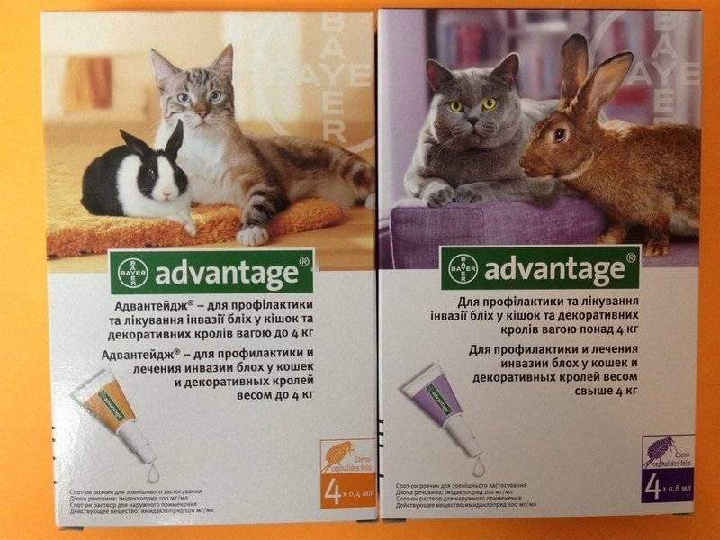 Адвантейдж для кошек — когда применяют?