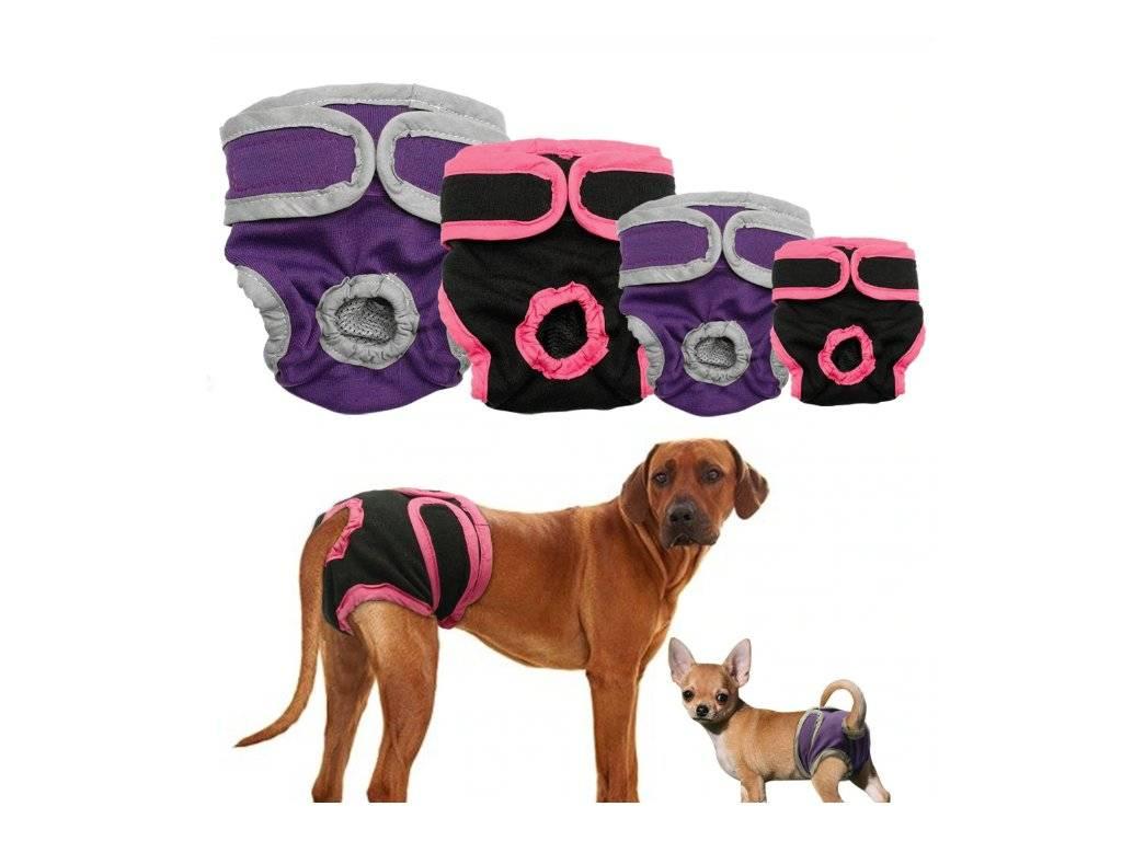 Какую породу собак выбрать для городской квартиры, для частного дома, для ребенка или новичку