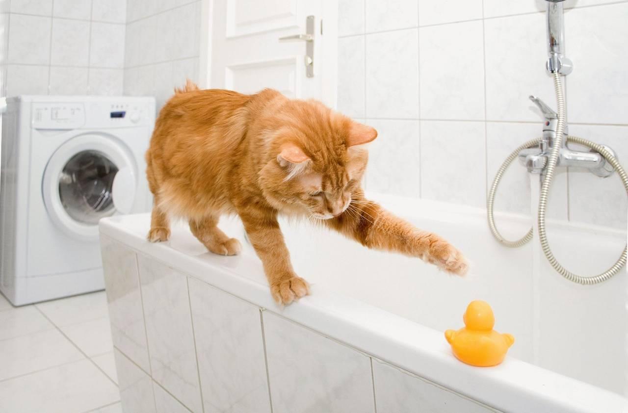 Как искупать кошку если она боится воды и царапается: эффективные способы и методы помыть питомца