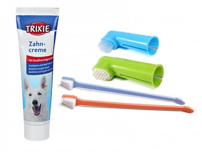 Зубной камень у собак | компетентно о здоровье на ilive