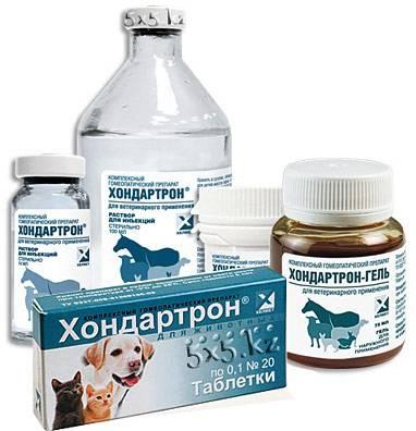 Хондропротекторы для животных: обзор препаратов