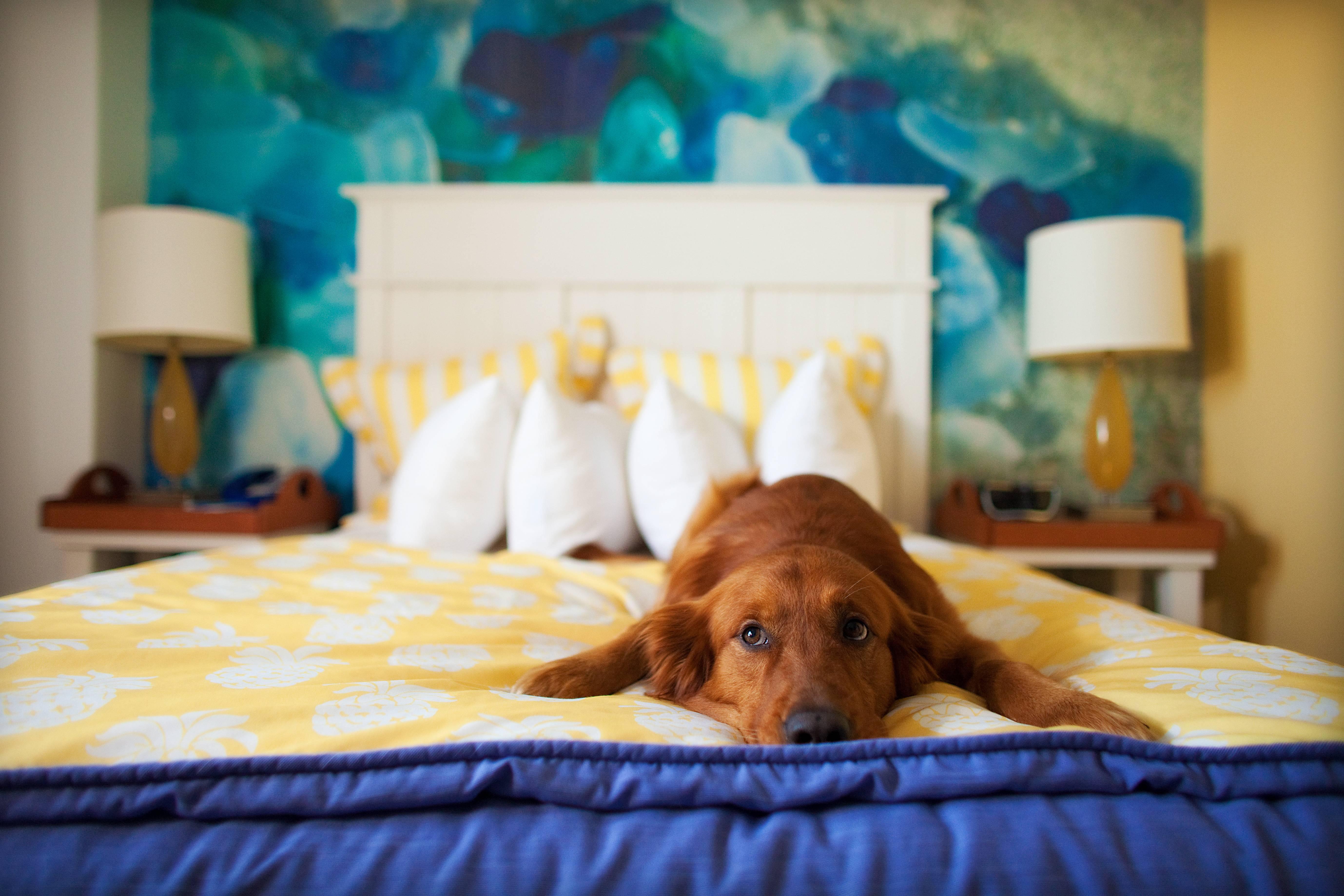 Как отучить собаку метить дома или в квартире