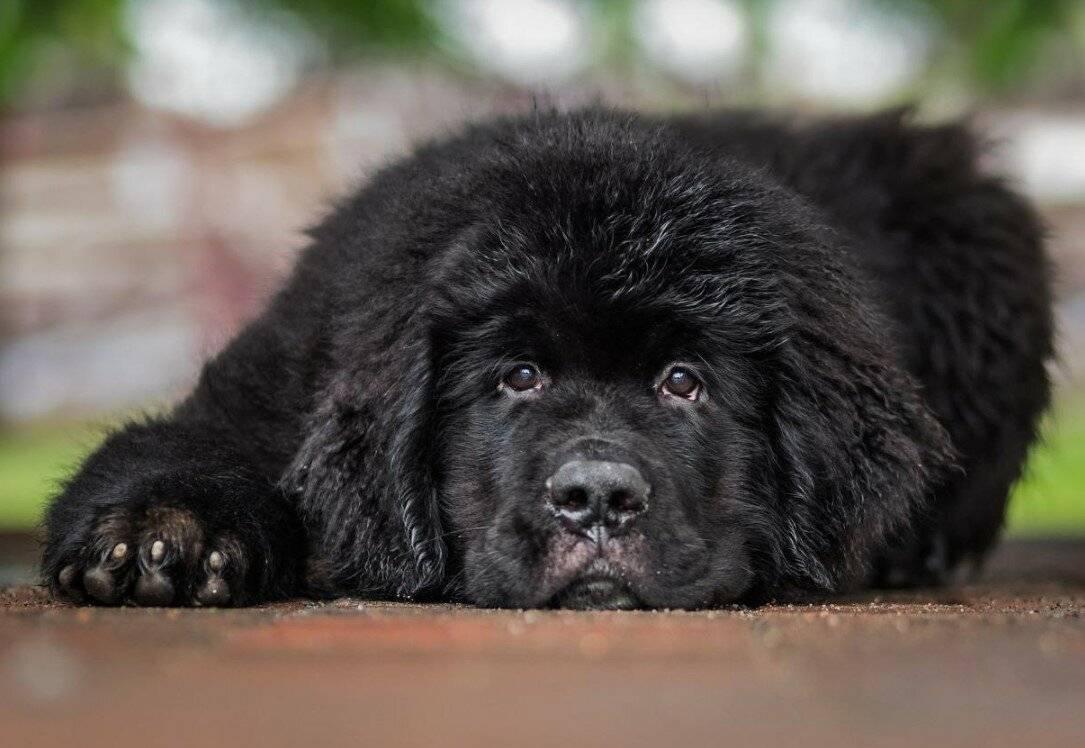 Ожирение у собак: признаки, причины, лечение