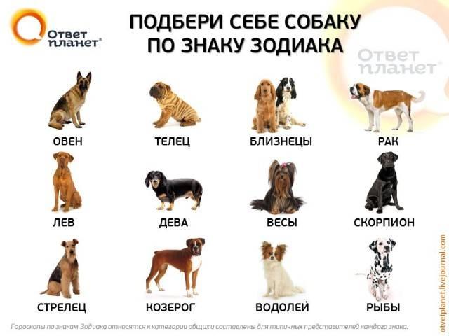 Гороскоп: животные какой породы подходят вам по знаку зодиака?