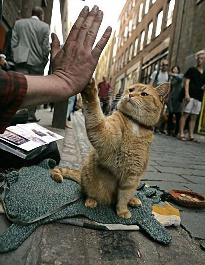 10 историй о героических кошках, которые спасли чьи-то жизни, а теперь спасут и ваш день