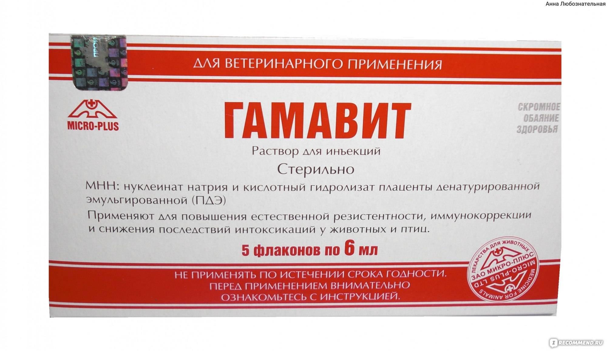 Ветеринарный препарат гамавит: состав, принцип действия и инструкция по применению