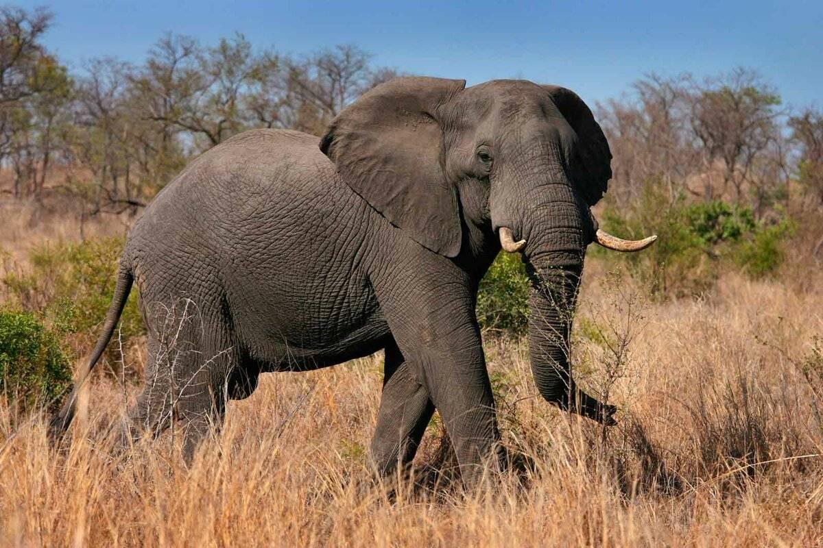 Самые опасные животные на земле – топ 10 | science debate