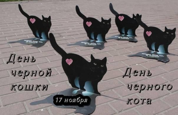 """Организация защиты кошек проводит акцию в великобритании """"месяц микрочипирования"""""""