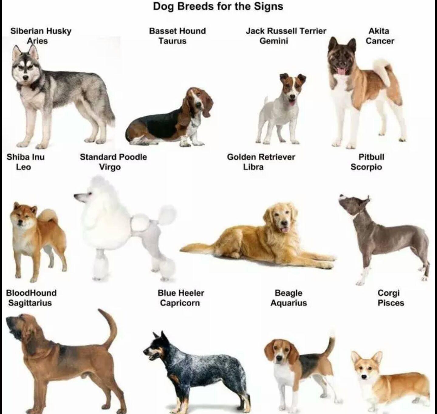 Какая порода собак подходит по знаку зодиака