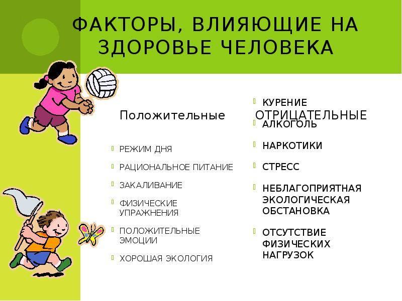 Русский охотничий спаниель: характеристика породы, отзывы