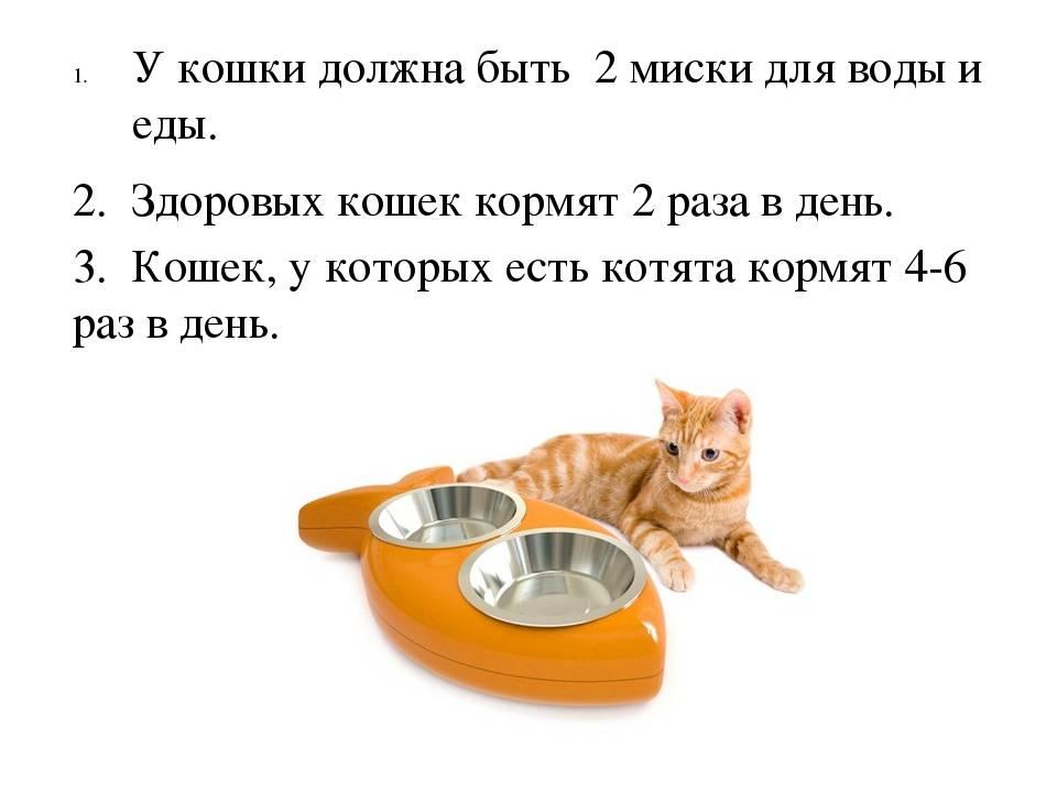 Как ухаживать за котенком: полезные советы как ухаживать за котенком: полезные советы