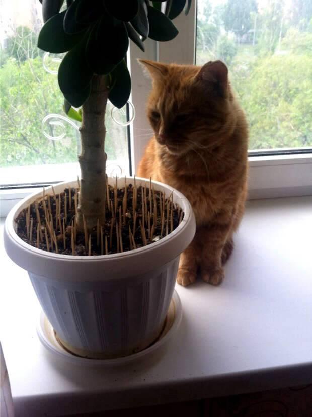 Передается ли лишай у кошек человеку, инкубационный период, симптомы, как лечить в домашних условиях
