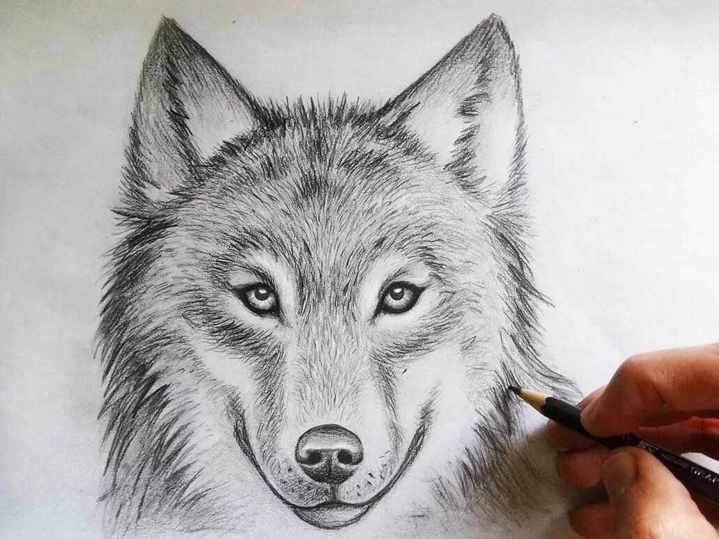 Как рисовать котенка карандашом поэтапно для начинающих — пошаговые уроки рисования