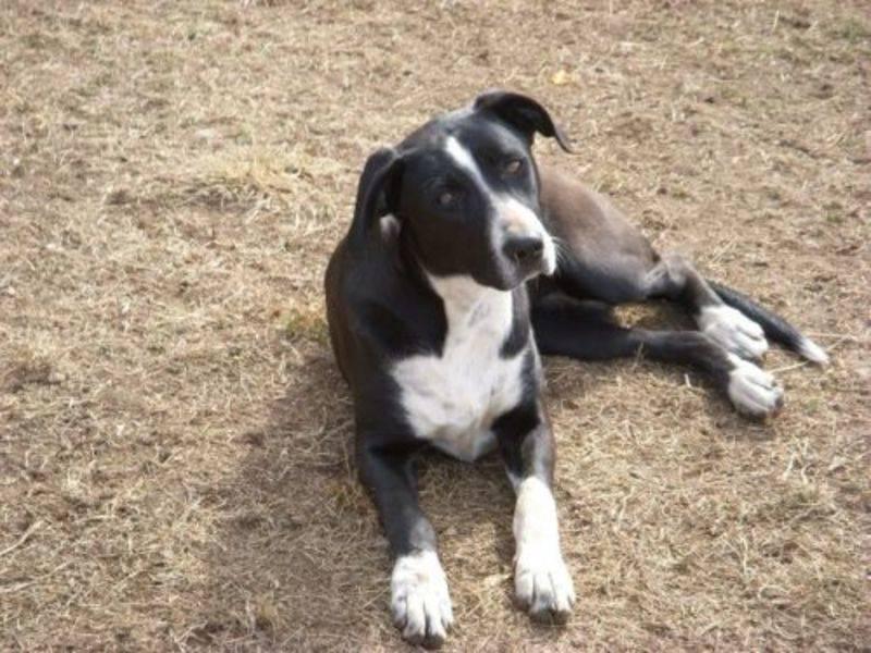 Как определить злая собака или нет: первичные и вторичные признаки