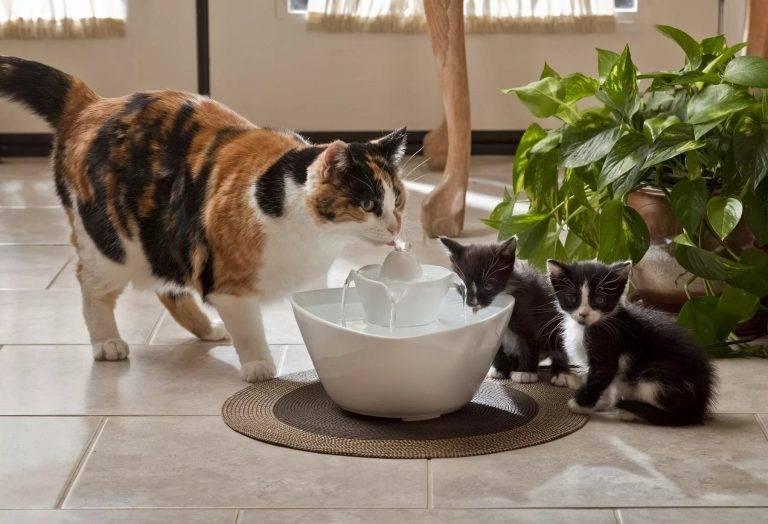 Лайфхаки для кота и хозяина: всё гениальное — просто