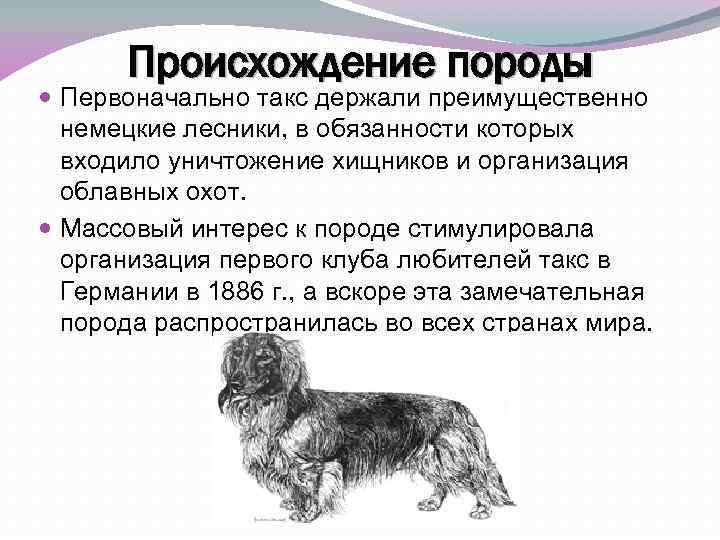 Такса стандартная: как выглядит на фото королевская согласно стандартов ркф и как определить чистокровную собаку