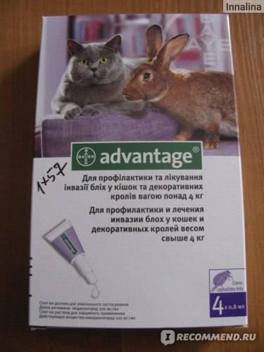Адвантейдж для кошек: инструкция по применению, отзывы, аналоги