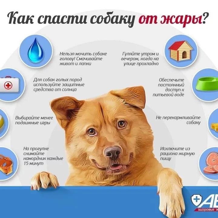 Как помочь собаке пережить жару. симптомы и помощь при солнечном ударе