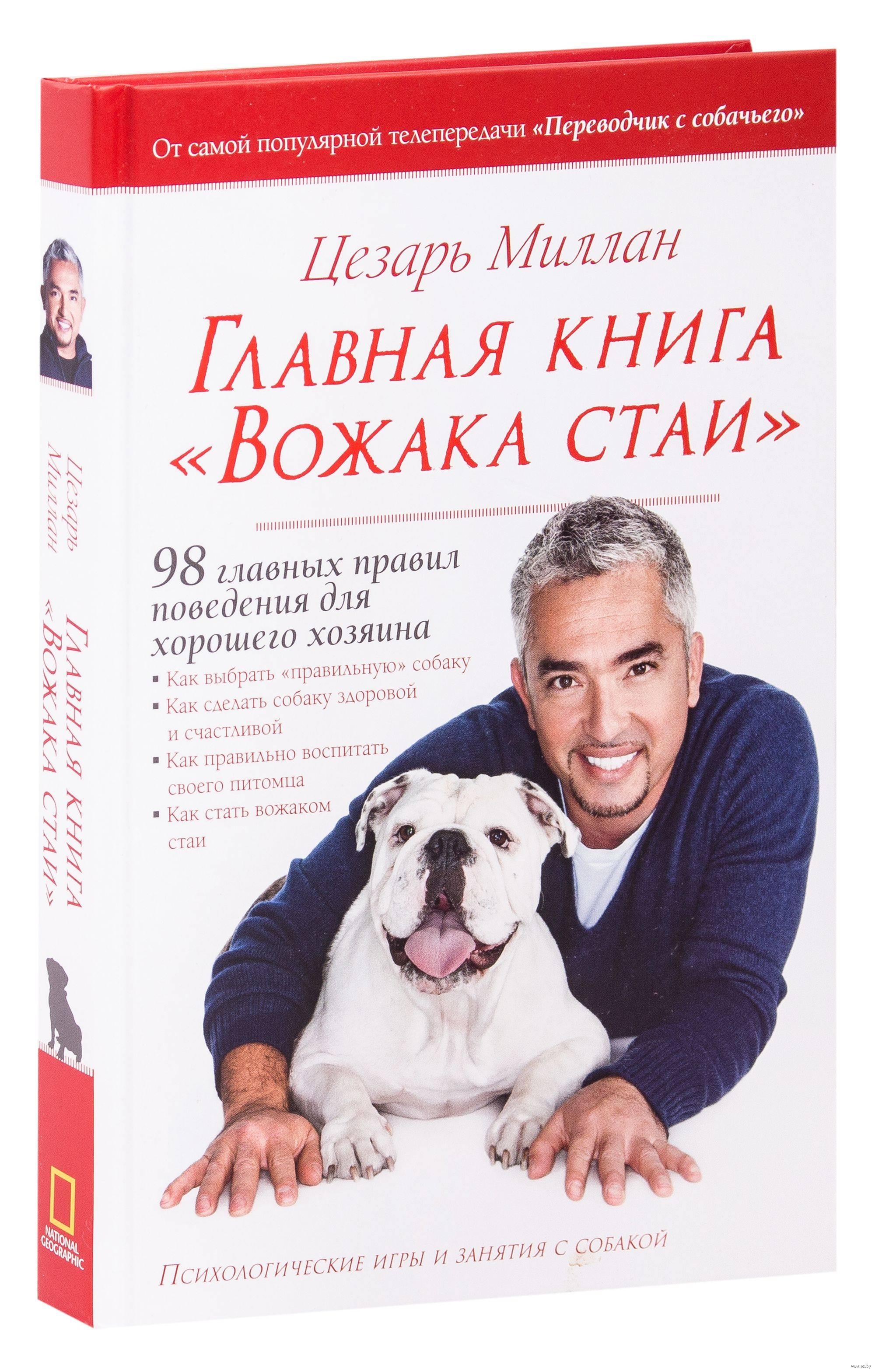 Как понять, кого собака выбрала хозяином или признаки вашего лидерства