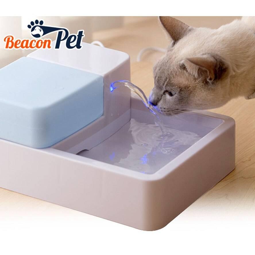 Поилки для кошек: разновидности и рекомендации по выбору