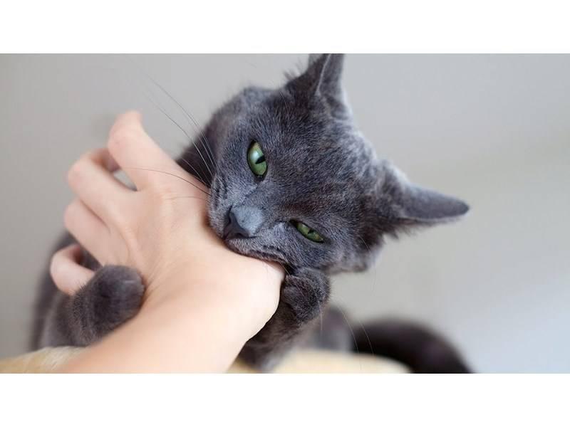 Как отучить котенка кусаться, царапать и что делать, если он все равно продолжает кидаться на руки и ноги?