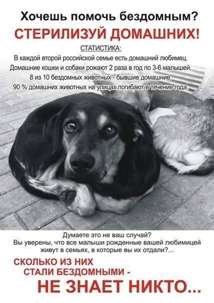 6 эффективных способов помочь бездомным животным