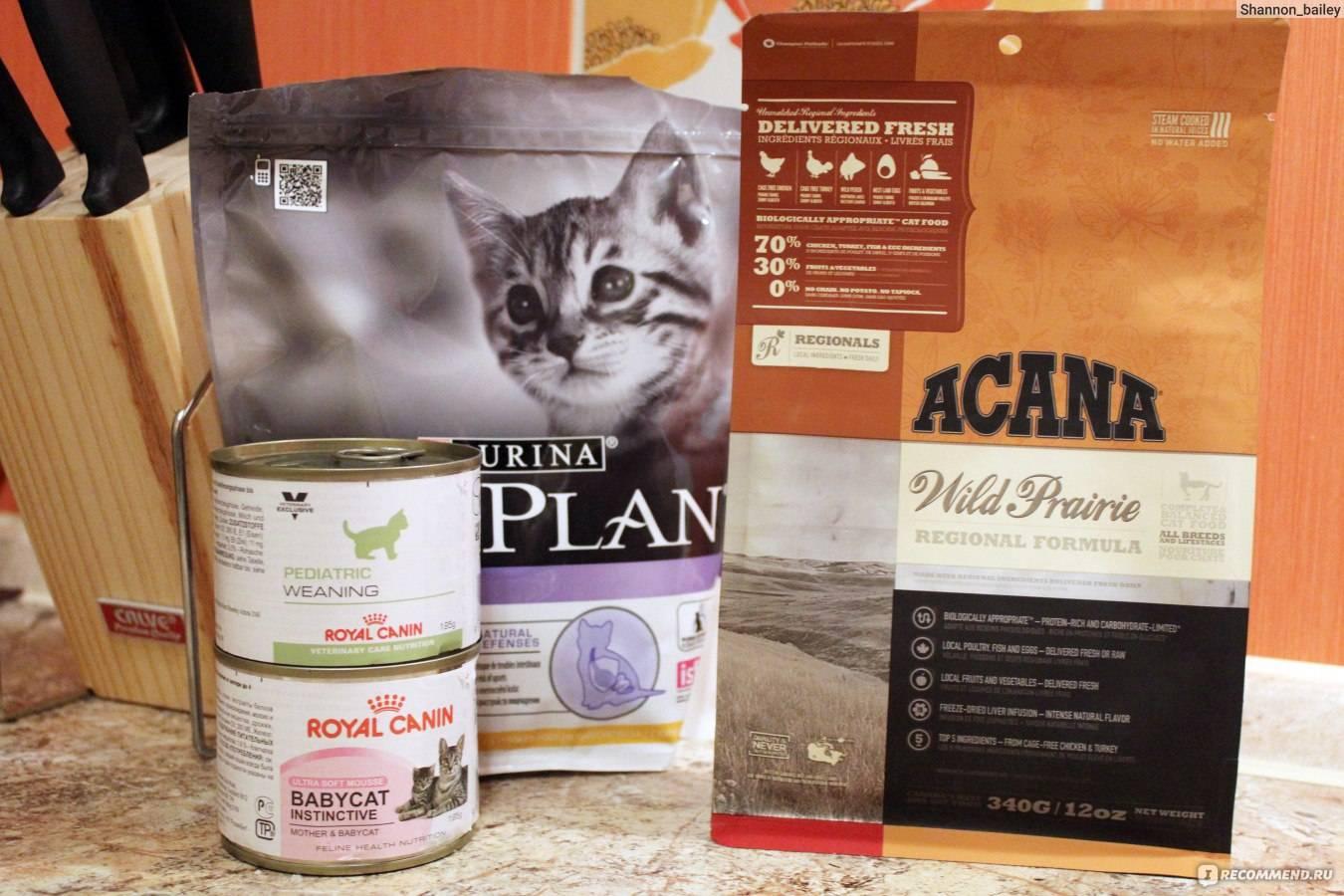 Корм акана для кошек: состав, стоимость, отзывы ветеринаров и владельцев кошек