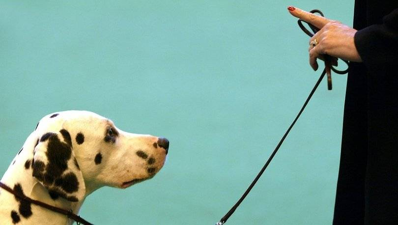 Как отучить собаку метить углы и писать дома?
