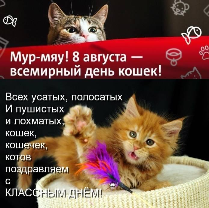 Всемирный день кошки и кота: какого числа отмечают в россии и в других странах - 1 марта или 8 августа, как проходит международный праздник