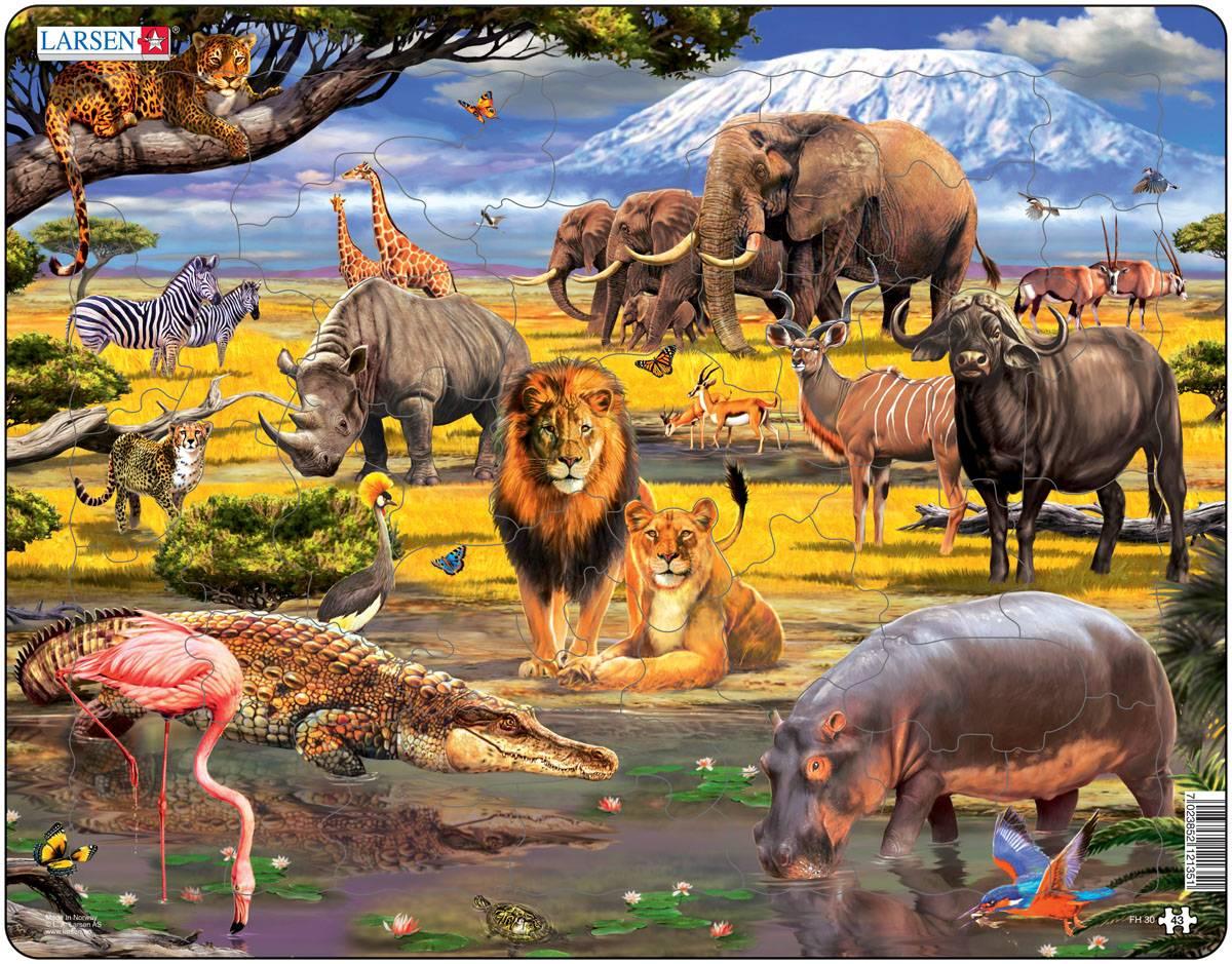 Живые организмы. признаки, классификация, строение, деление