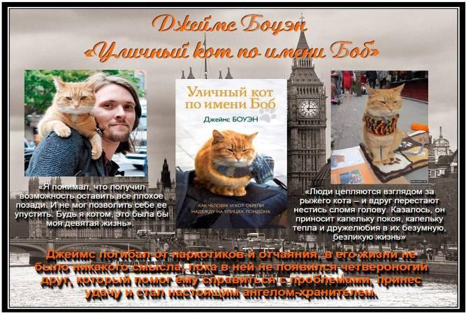 Бездомные котята: можно ли забирать их в квартиру и как одомашнить?