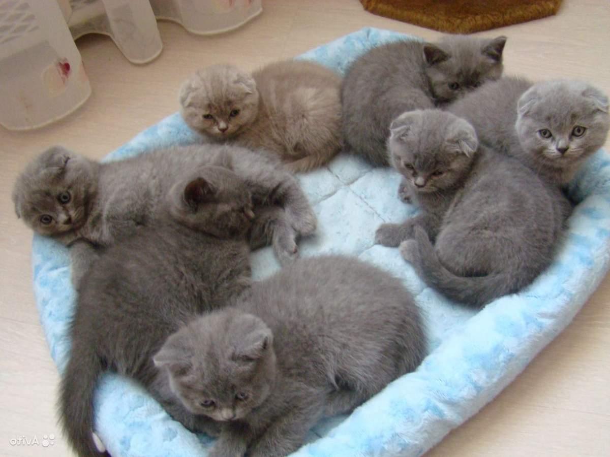 Как выбрать котенка для дома – на что нужно обратить внимание