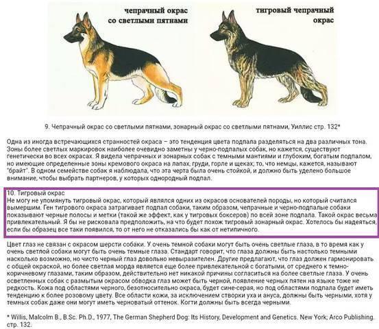 Как отличить чистокровного щенка немецкой овчарки от помеси