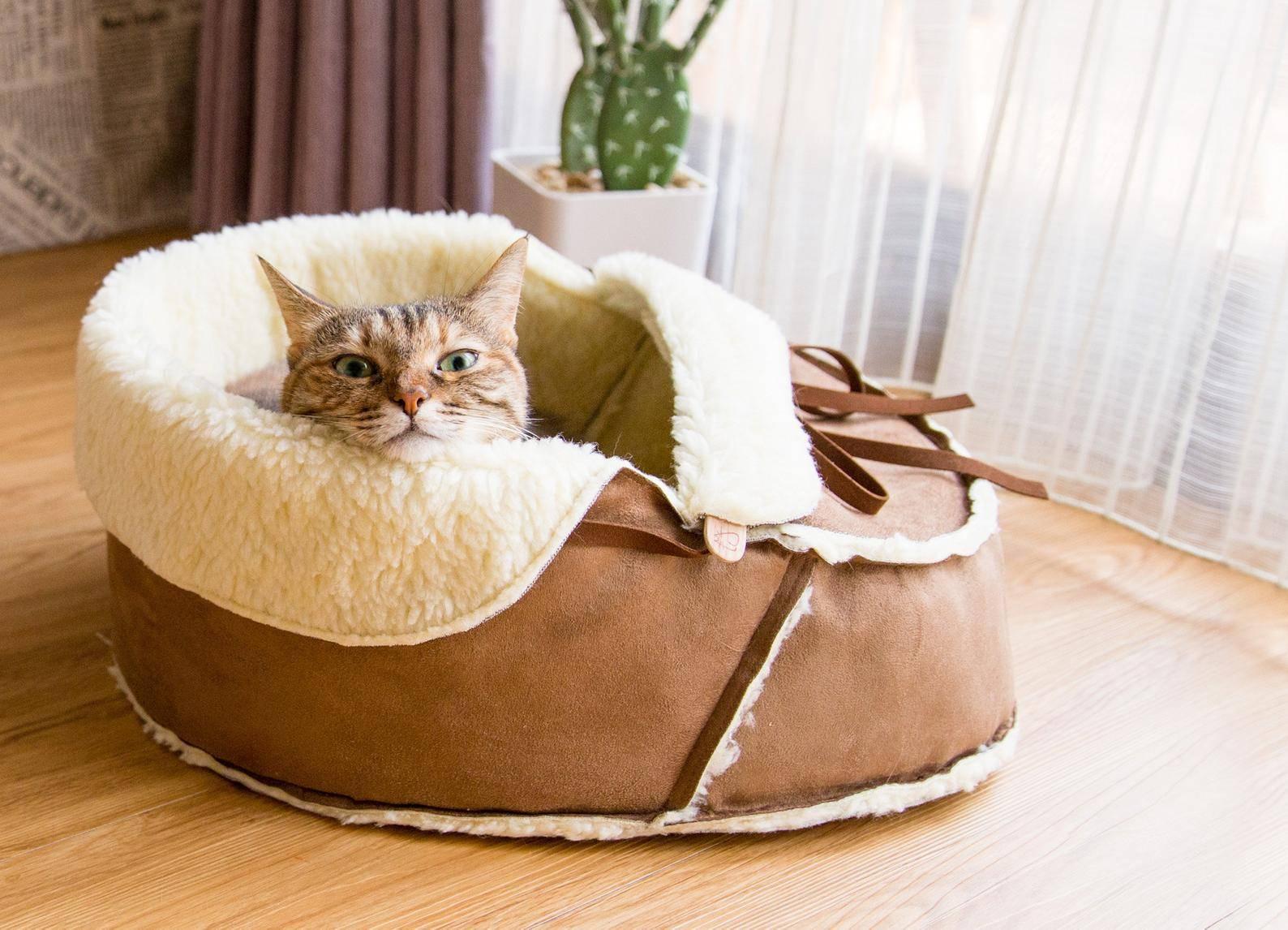 Обогащенная среда для кошек: нужна ли кошкам компания? - wikipet