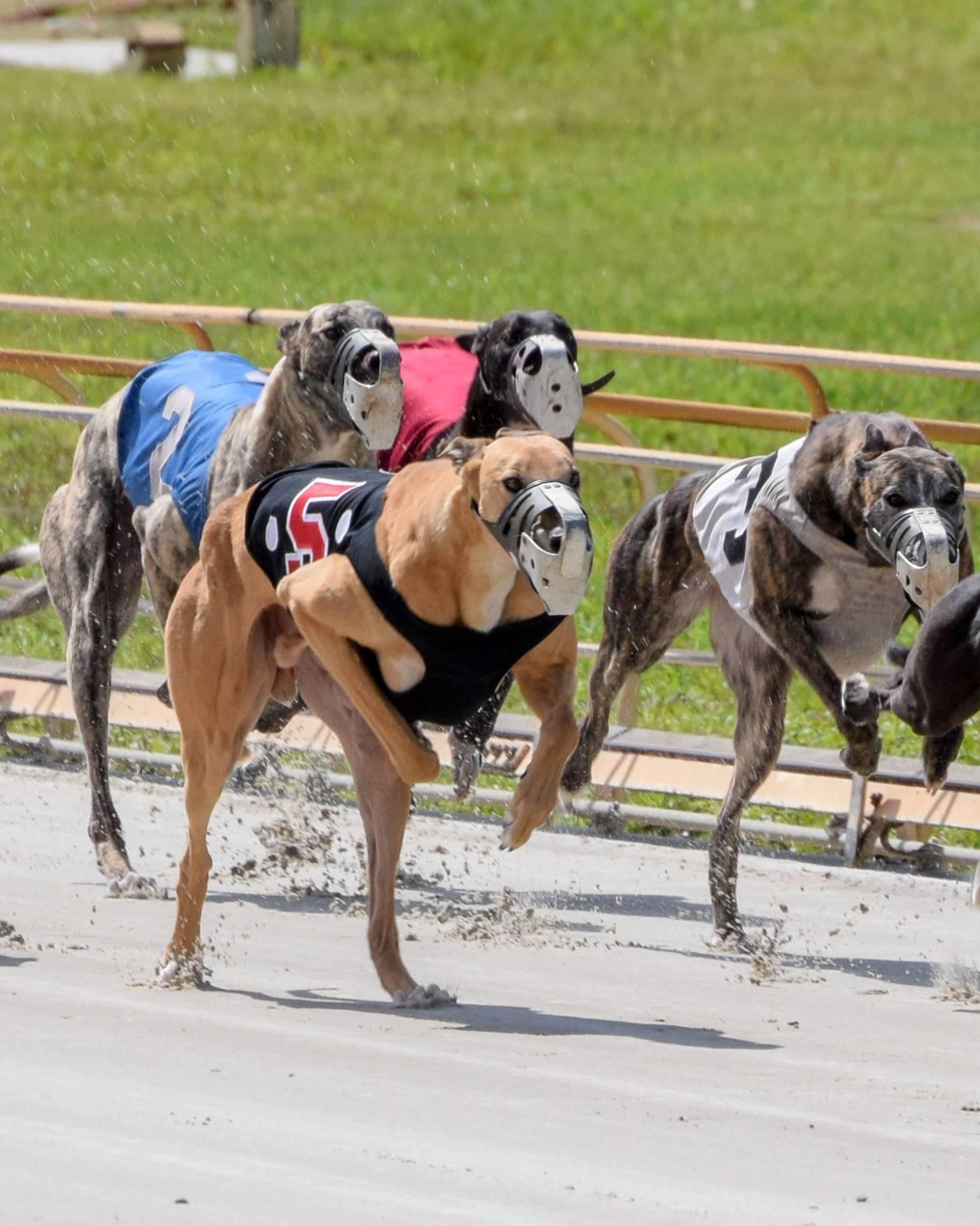 15 самых быстрых пород собак