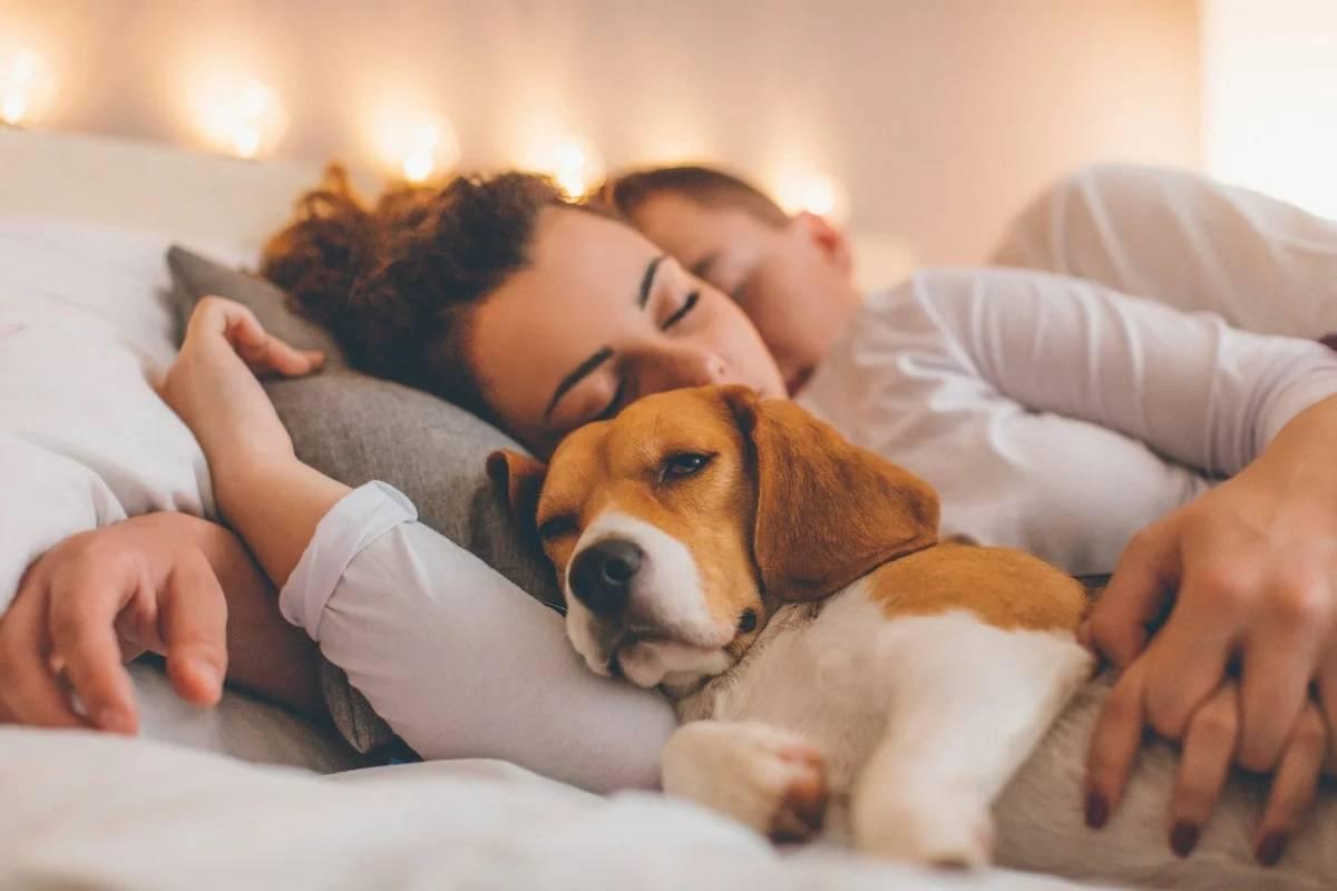 Почему домашние животные не должны спать с вами в одной постели?