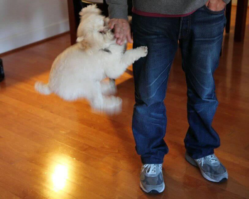 Как научить собаку не убегать из дома: 14 шагов