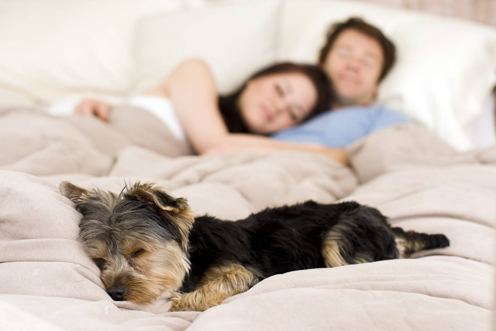 Почему собака писает на кровать | dog-care - журнал про собак