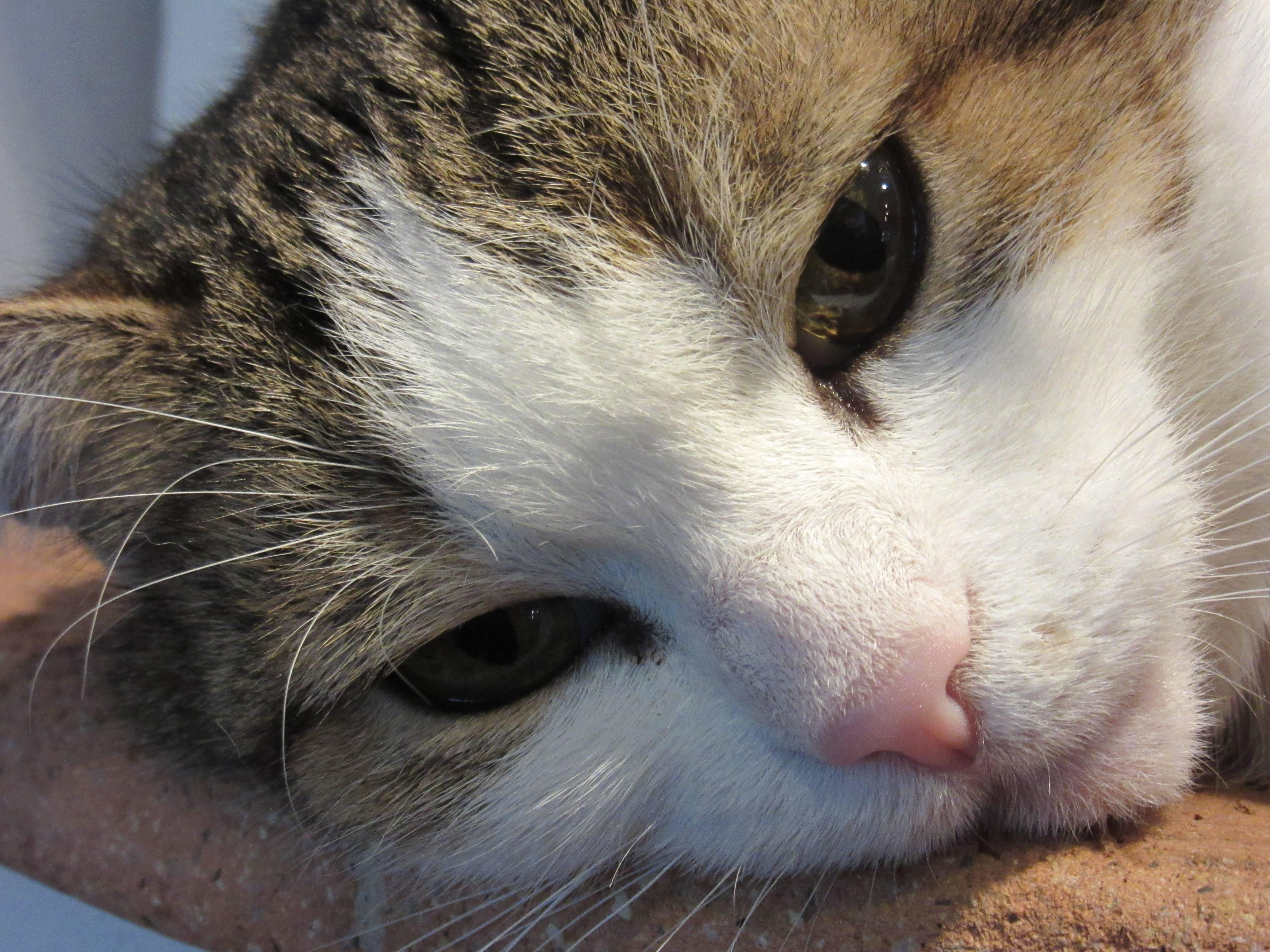 Какой нос должен быть у здоровой кошки