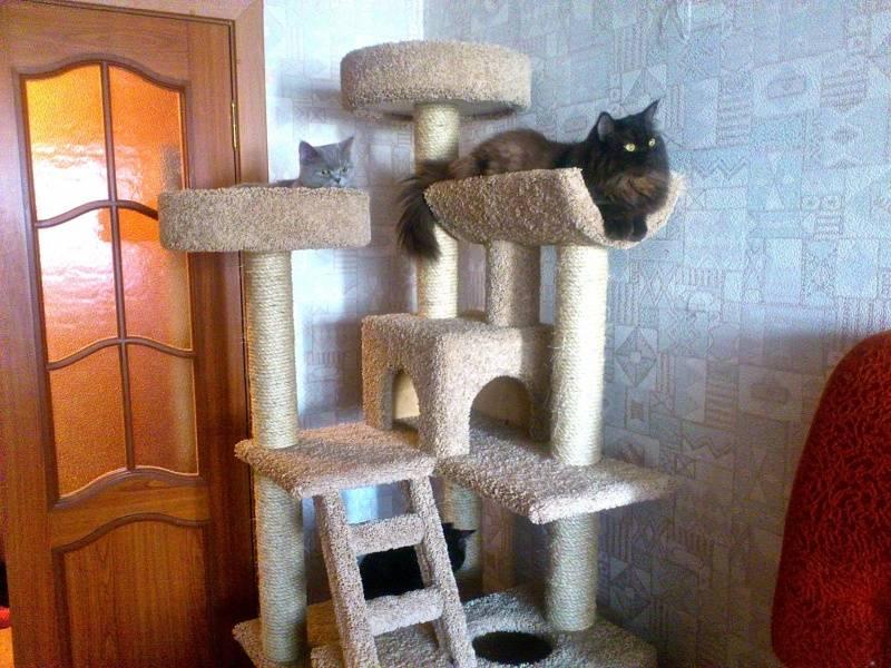 Нужно два лотка, а не один: что вы должны знать, если берете в дом кота