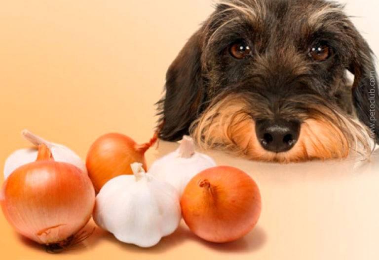 Какими продуктами нельзя кормить собак и кошек
