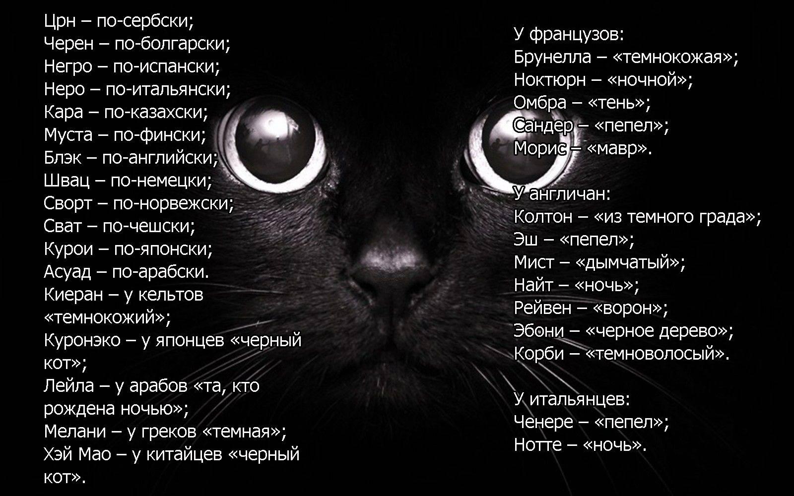 Прикольные и оригинальные имена для котов и кошек