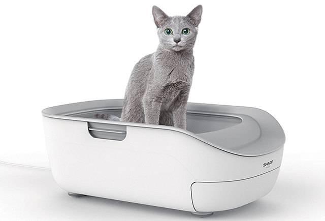 Закрытый лоток для кошек | туалет, отзывы, фото