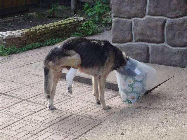 Почему собаки валяются в тухлятине и экскрементах — причины, как отучить