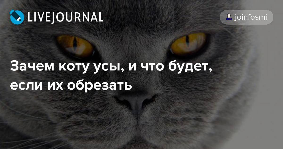 За какое время отрастут усы у кошки